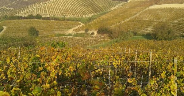 A walk through the Biellese vineyards