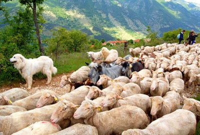 Transhumance Experience in Abruzzo